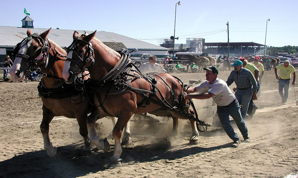 Horse Pulling